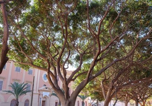 """Monti: """"Il verde? Noi lo piantiamo e lo curiamo. E gli alberi di Sant'Erasmo necessitano di un intervento urgente"""""""